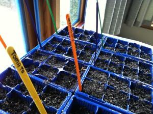 seed_tray