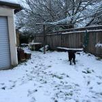 Snowy back yard.