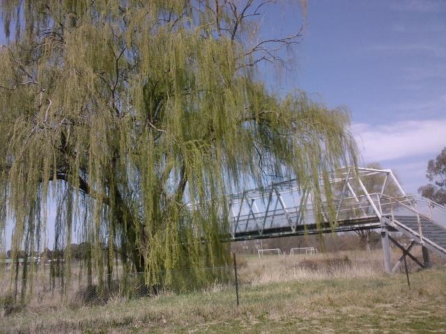 Willow and bridge, Bathurst